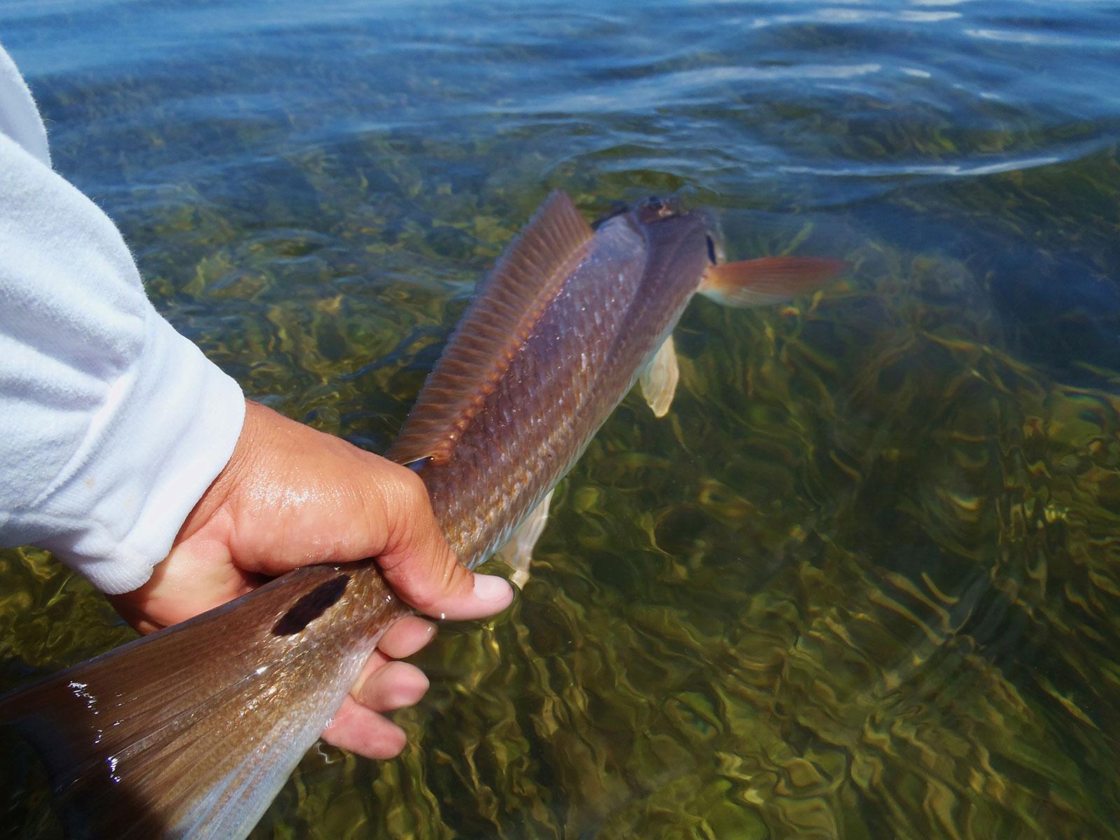 Holy-Redfish-008